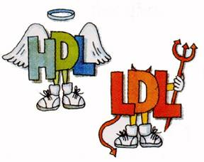 LDL and HDL The bad and The Good Cholesterol