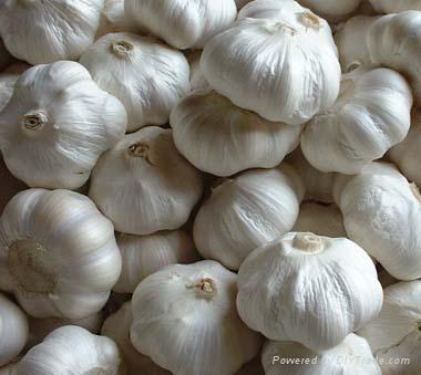 The Beneftis of Garlic