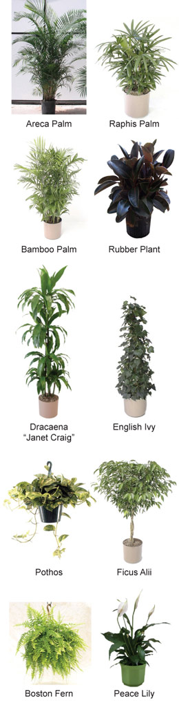 House plant images and names