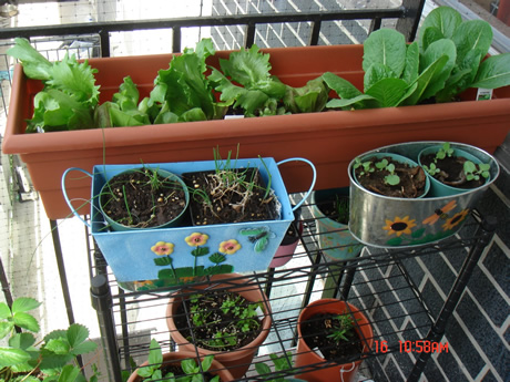 3 steps to building a garden by using containers dr akilah celestial healing wellness center - Veggies that grow on balcony ...