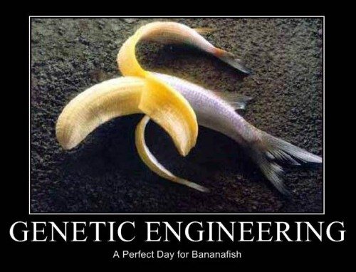 genetically modified organism This topic contains 35 study abstracts on genetically modified organisms indicating they may negatively impact food allergies, dna damage, and endometriosis.